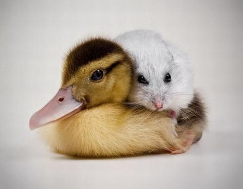 もう可愛すぎて何と言って良いのか分からない動物